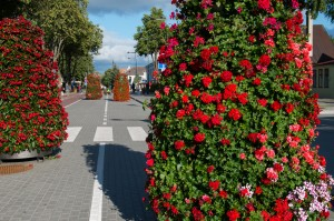 Blommor längs hela vägen.