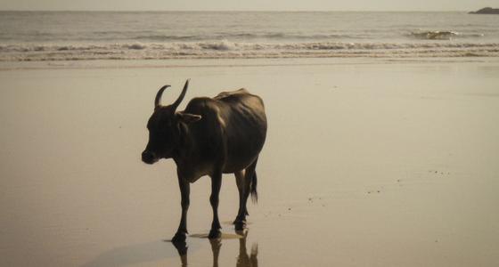 TillbakablicksTorsdag – Goa, Indien del 3