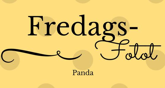 FredagsFotot – adorable panda