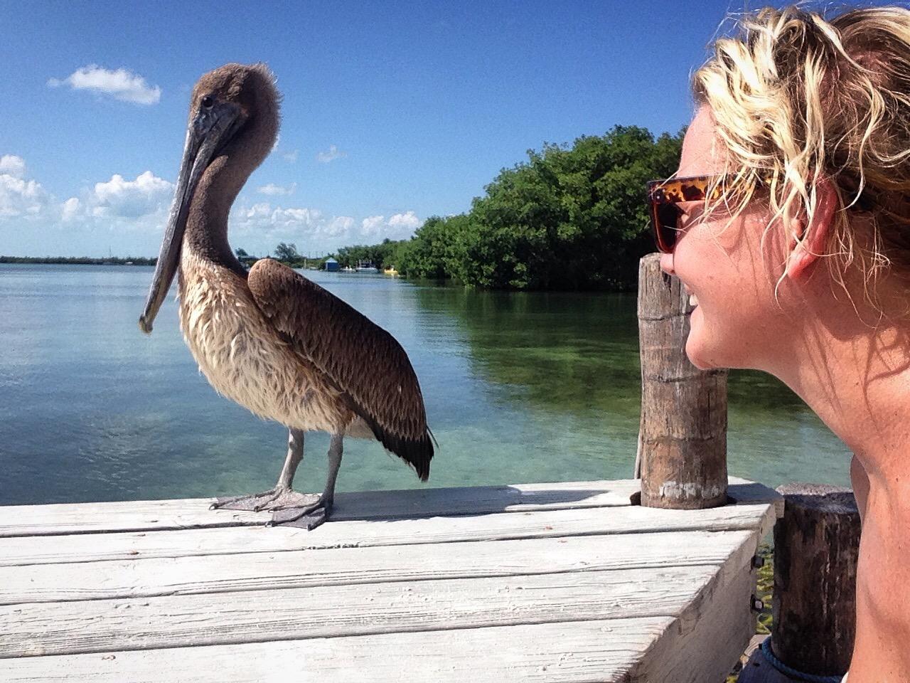 Jag och en pelikan
